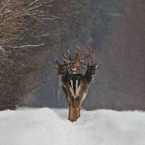 Фото приколы Щелчок в нужную секунду (54 фото)