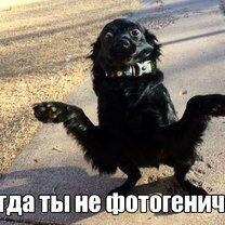 Фото приколы Смешные фотки для бодрого духа (46 фото)