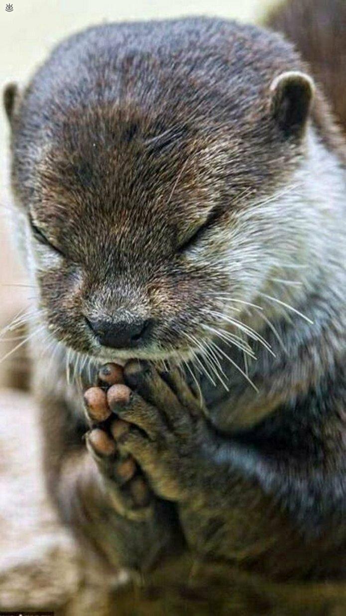 Поздравление днем, молись картинка прикольная