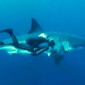 Акулы в гиф-изображениях