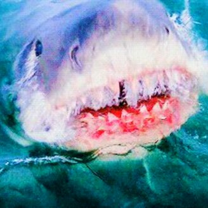 Фото приколы Акулы в гиф-изображениях (16 фото)