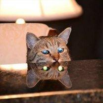 Коварные и суровые кошки смешных фото приколов