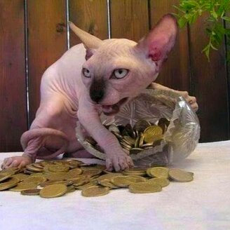 Фото приколы Коварные и суровые кошки (47 фото)