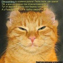 Питомцы-проказники смешных фото приколов