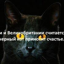 Фото приколы В фактах о людях и животных (29 фото)