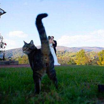Коты, внезапно попавшие в кадр смешных фото приколов