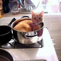 Коты, затекающие куда угодно