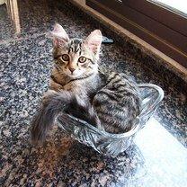 Фото приколы Коты, затекающие куда угодно (23 фото)