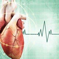 Интересно о сердце человека