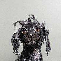 Фото приколы Псинки после купания (10 фото)