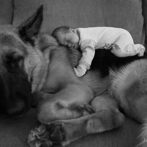 Дружные детишки и собаки