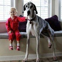 Фото приколы Дружные детишки и собаки (16 фото)