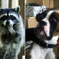 Прикольная мимика зверей смешных фото приколов