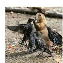 Красота дикой и прирученной природы смешных фото приколов