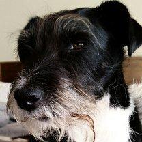 Фото приколы Осуждающие собачьи точка зрения (24 фото)