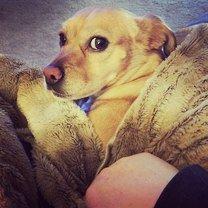 Фото приколы Осуждающие собачьи мировоззрение (24 фото)