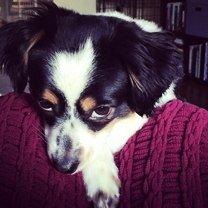 Фото приколы Осуждающие собачьи убеждения (24 фото)