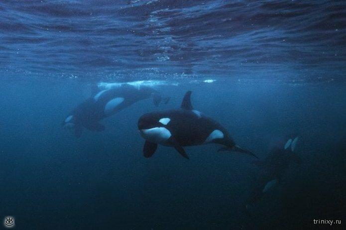 Если хотите знать больше о морских глубинах 0