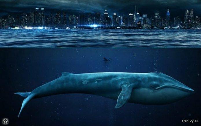 Если хотите знать больше о морских глубинах 4