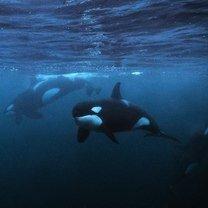Если хотите знать больше о морских глубинах фото