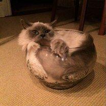 Фото приколы Утекающие коты (13 фото)