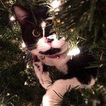 Коты на ёлках смешных фото приколов