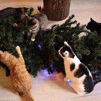 Фото приколы Коты в ёлках (14 фото)