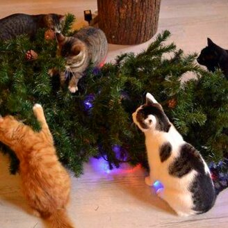 Фото приколы Коты на ёлках (14 фото)
