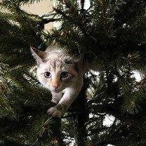 Фото приколы Коты бери ёлках (14 фото)