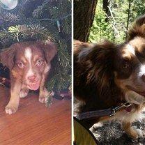 Какими щенята выросли фото приколы