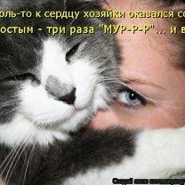 Юмор из котоматрицы