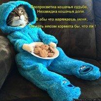 Фото приколы Юмор изо котоматрицы (38 фото)