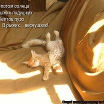 Фото приколы Юмор с котоматрицы (38 фото)
