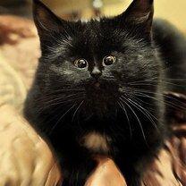 Фото приколы Как произвести с кошек чуда-юда (25 фото)