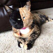 Фото приколы Как содеять с кошек чуда-юда (25 фото)