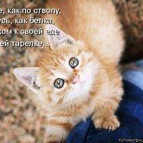 Фото приколы Котоматрица в подарок! (33 фото)