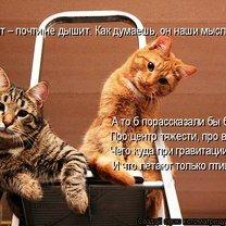 Фото приколы Котоматрица на подарок! (33 фото)