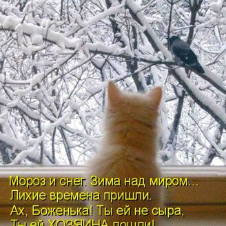 Фото приколы Котоматрица во подарок! (33 фото)