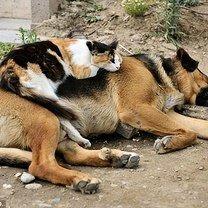 Собака - подушка для кошки фото приколы