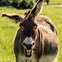 Самые чудные фото с питомцами смешных фото приколов