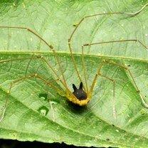 Фото приколы Вашему вниманию - паук-кролик (4 фото)