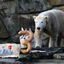 Фото приколы Суровые равно красивые медведи (15 фото)