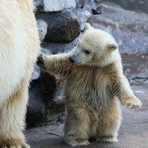 Фото приколы Суровые равным образом красивые медведи (15 фото)