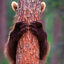 Суровые и красивые медведи