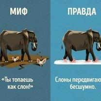 Правда и мифы о зверушках