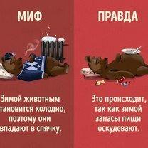 Фото приколы Правда и мифы о зверушках (10 фото)