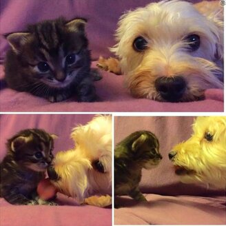 Как уживаются кошка с собакой