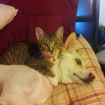 Как уживаются кошка с собакой фото приколы