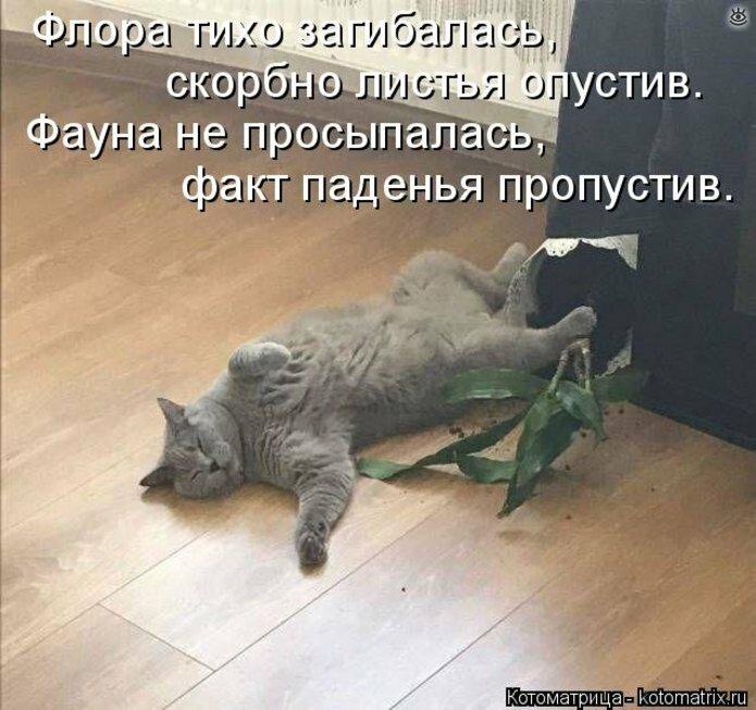 Сборка смешных зверушек из котоматрицы 22