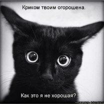 Фото приколы Сборка смешных зверушек из котоматрицы (33 фото)